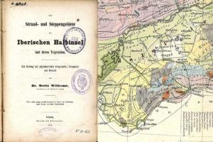 El área del pinsapo señalada sobre toda la serranía de Ronda por Willkomm en 1852