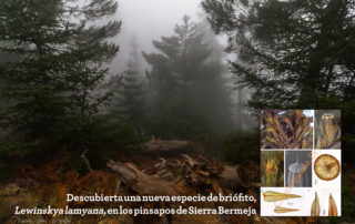 Descubierto nuevo briófito en Sierra Bermeja