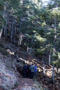 Vicerrectores de la UMA visitando el pinsapar de Los Reales de Sierra Bermeja