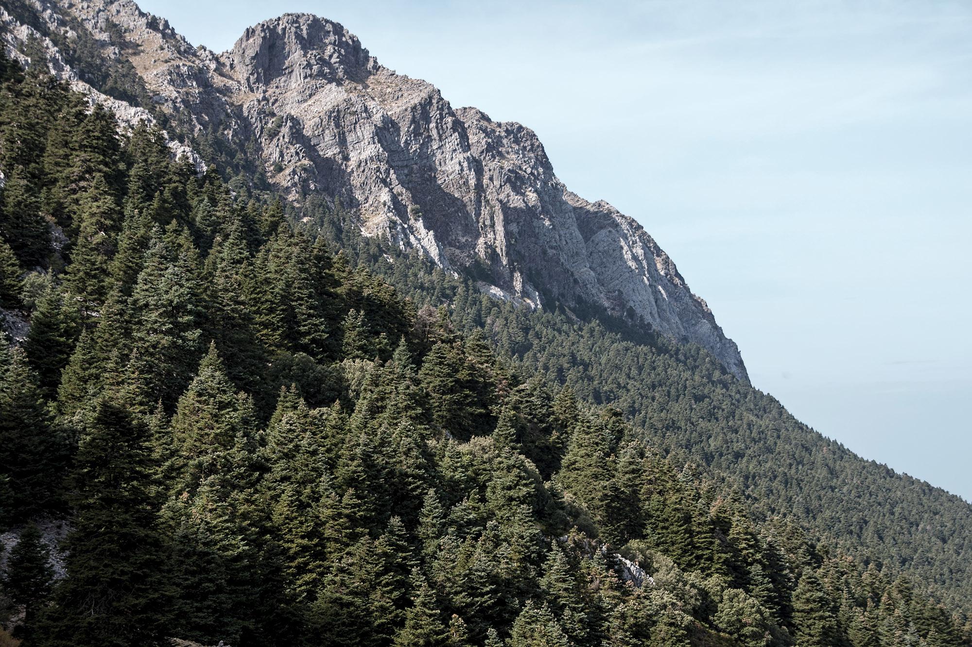 Pinsapar del Parque Natural de las sierras de Grazalema y Líbar