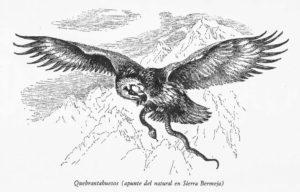Quebrantahuesos. Apunte del natural en Sierra Bermeja (Abel Chapman y Walter J.Buck, 1893)