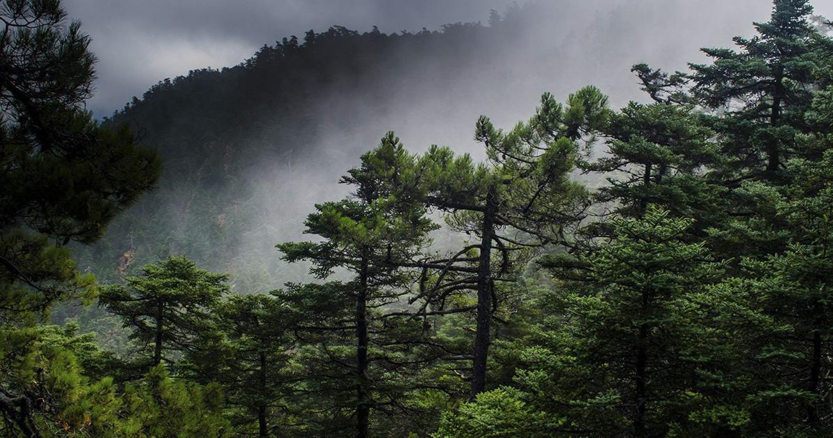 Sierra Bermeja, naturalmente Parque Nacional