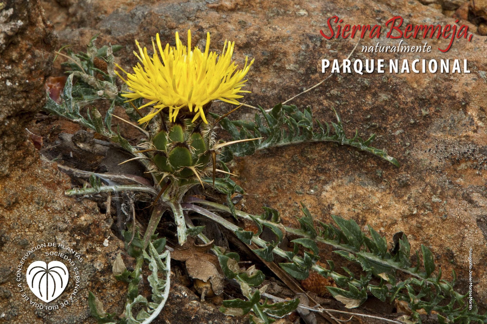 Sociedad Española de Conservación de Plantas
