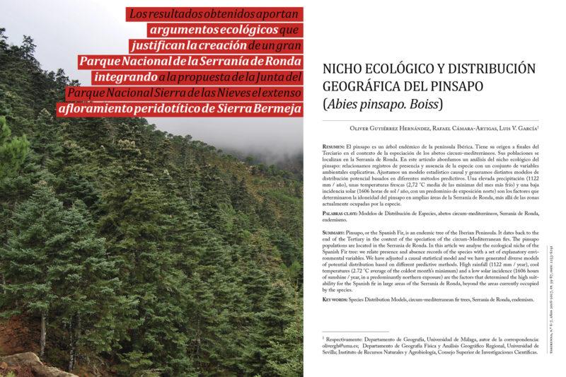 El pinsapo, árbol endémico de la Serranía de Ronda, en peligro crítico