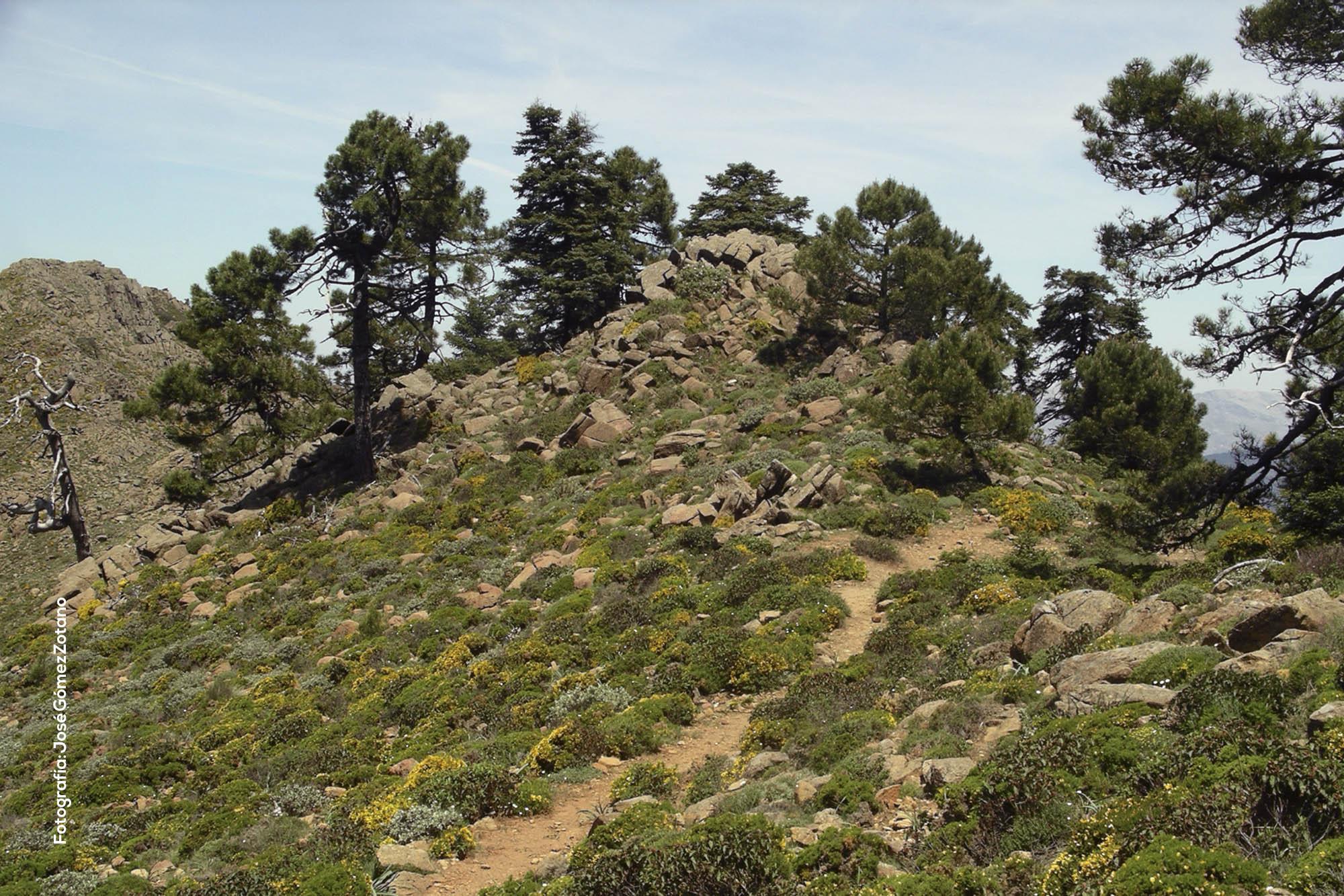 Ecosistema serpentínico de Sierra Bermeja