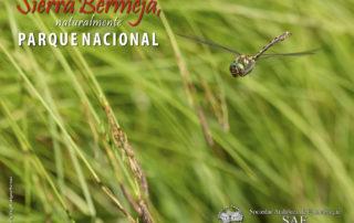 Sociedad Andaluza de Entomología