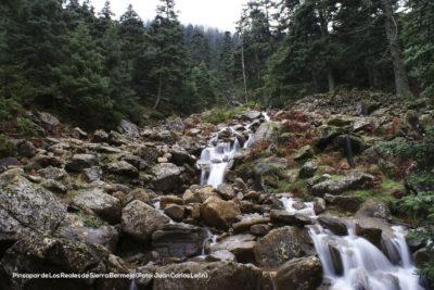 Pinsapar de Los Reales de Sierra Bermeja