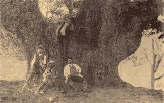 Castaño Santo (1891). Foto: Joaquín Chinchilla