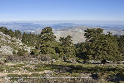Pinsapar sobre materiales carbonatados. Parque Natural Sierra de las Nieves