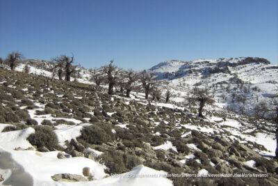 Paisaje Nevado. Parque Natural Sierra de las Nieves