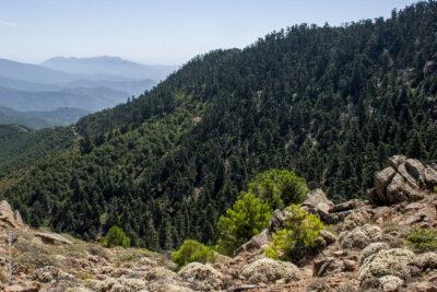 Los Reales de Sierra Bermeja