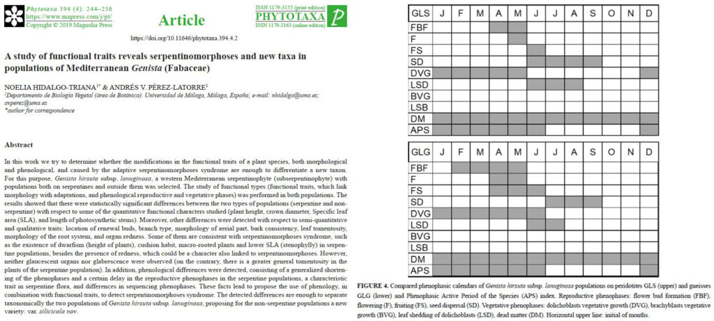 Phytotaxa 394(4). Hidalgo Triana y Pérez Latorre