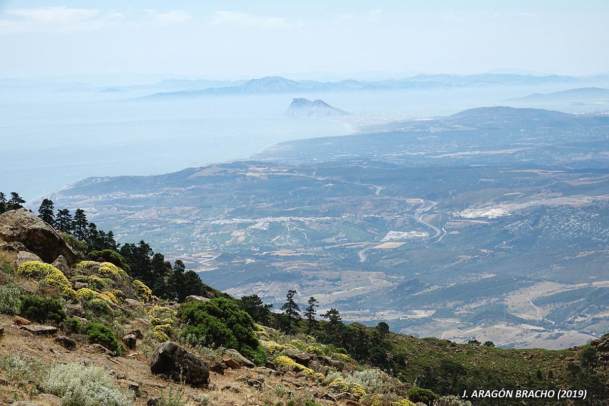El Campo de Gibraltar desde Sierra Bermeja (Autor: José Aragón Bracho)