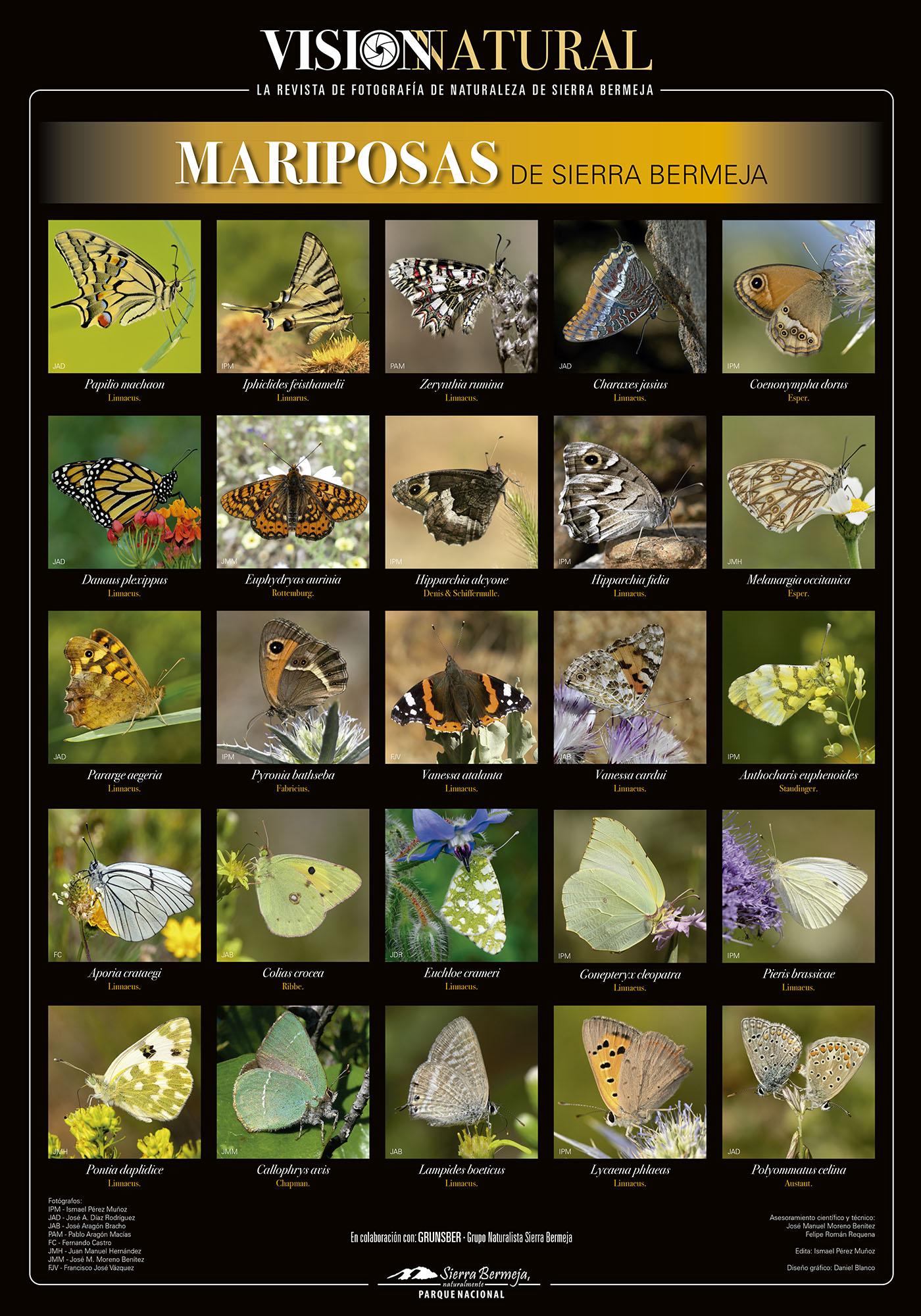Mariposas de Sierra Bermeja