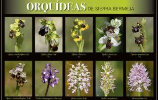Orquídeas de Sierra Bermeja
