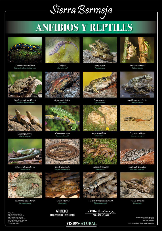 Repiles y anfibios de Sierra Bermeja (Visión Natural)