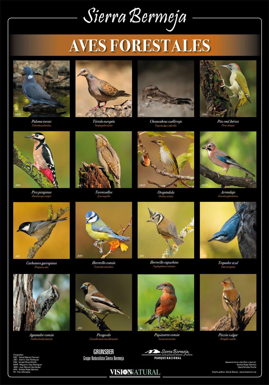 Aves forestales de Sierra Bermeja (Visión Natural)