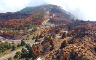 Los Reales de Sierra Bermeja tras el incendio