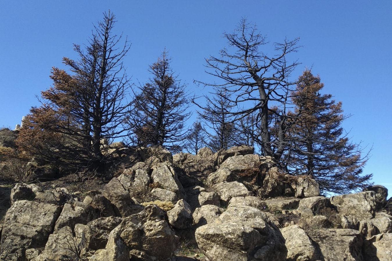 Incendio de Sierra Bermeja